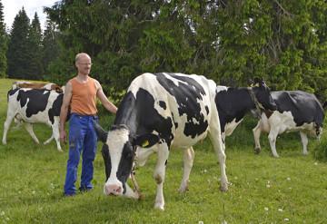 23 éleveurs de la vallée livrent quotidiennement leur production de lait de montagne à la fromagerie.